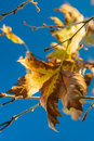 Autumn leaves against blue Royalty Free Stock Photos