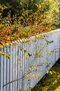 Autumn leaves along white fence Royalty Free Stock Photo