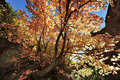 Autumn Leaves on Angel& x27;s Landing Trail in Zion National Park Royalty Free Stock Photo