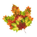 Autumn leaves arranged as a single maple leaf Royalty Free Stock Photos