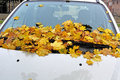Autumn leaves on auto of a tree fell a car windshield Stock Images