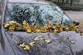 Autumn leaves on auto of a tree fell a car windshield Stock Image