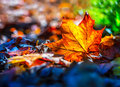 Autumn leaves in autumn colours and lights Royalty Free Stock Photo