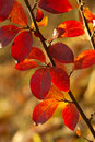 Autumn leaves background Royalty Free Stock Image