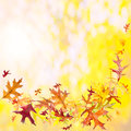 Autumn leaves background with falling oak and copy space Stock Photography
