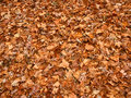 Autumn leaves background of on a forest floor of illinois Stock Image