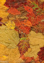 Autumn leaves background leafs Royalty Free Stock Photo