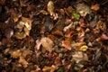 Autumn leaves background stock photo Stock Image