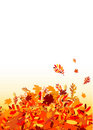 Autumn leaves background for your design Royalty Free Stock Images