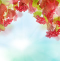 Autumn leaves and berries on background sky Royalty Free Stock Photo