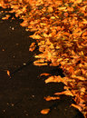 Autumn Leaves on Black Asphalt Royalty Free Stock Photography
