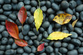 Autumn leaves and black pebbles Royalty Free Stock Photo