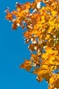 Autumn Leaves with Blue Sky Royalty Free Stock Photos
