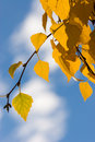Autumn leaves and blue sky Royalty Free Stock Photo