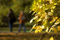 Autumn leaves with blur couple Stock Image