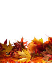Autumn leaves border Stock Photos