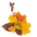 Autumn leaves bouquet isolated on white Royalty Free Stock Photo