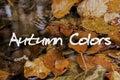 Autumn Leaves In Brook. Autumn...