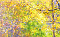 Autumn leaves in brunches shoot forest Stock Photo