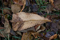 Autumn leaves can be used as background Royalty Free Stock Images