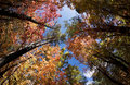 Autumn Leaves Change Colors in Fourth of July Canyon in New Mexico Royalty Free Stock Photo