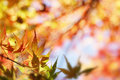 Autumn leaves changing color in forest Stock Photo