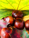 Autumn leaves and chestnuts. Stock Image