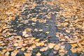 Autumn leaves on city park pathway Royalty Free Stock Photo