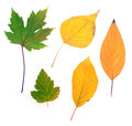 Autumn leaves collection beautiful colourful isolated on white background Stock Photography