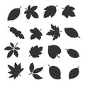 Autumn leaves collection. Vector eps10.
