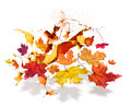 Autumn leaves color burs colorful maple flying with seasonal burst Stock Photos