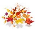Autumn Leaves Color Burs