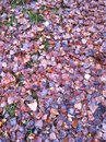 Autumn leaves colored Royalty Free Stock Images