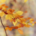 Autumn leaves colorful close up Royalty Free Stock Photography