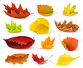Autumn leaves colorful collection isolated on white Stock Photography
