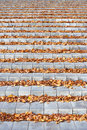 Autumn leaves on the concrete stairs in park Stock Photo