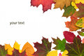 Autumn leaves with copy space Royalty Free Stock Photography