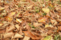 Autumn leaves covered the earth. Royalty Free Stock Photo