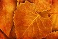 Autumn Leaves Details Nature B...