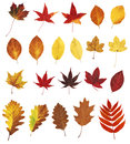 Autumn leaves different colorful on white background Stock Photo