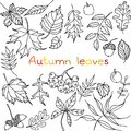 Autumn leaves doodles set file eps format Royalty Free Stock Photos