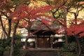 Autumn leaves at engaku temple in kamakura japan Stock Photography