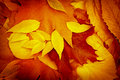 Autumn leaves falen leaves on ground in the forest Stock Photography