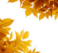 Autumn leaves, fall season Royalty Free Stock Photo
