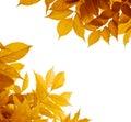 Autumn leaves, fall season