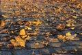 Autumn leaves fallen on cobblestones Royalty Free Stock Photography
