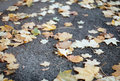 Autumn leaves fallen on the ground Royalty Free Stock Photo