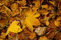 Autumn leaves fallen on the ground Stock Photography
