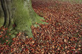 Autumn leaves fallen on lawn and tree Royalty Free Stock Photo
