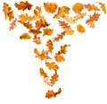 Autumn leaves falling isolated on white background Royalty Free Stock Photo